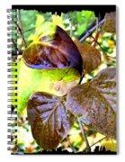 Autumn Splendor 4 Spiral Notebook