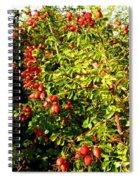 Autumn Splendor 5 Spiral Notebook