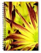 Autumn Starburst Spiral Notebook
