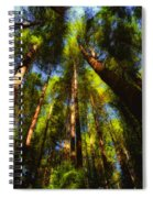 Autumn Sunlight Cast On Majestic Green Oregon Old Growth Forest  Spiral Notebook