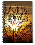 Autumn Tree In The Sunset Spiral Notebook