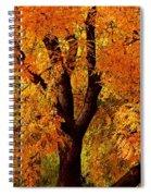 Autumn Tree Spiral Notebook