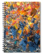 Autumn Vineyard Sunlight Spiral Notebook
