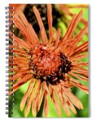 Autumn's Gerber Daisy Spiral Notebook