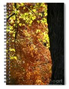 Autumn's Golds Spiral Notebook