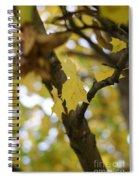 Autumn's Wondrous Colors 1 Spiral Notebook