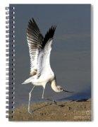 Avocet Dancer Spiral Notebook