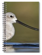 Avocet Feeding Spiral Notebook