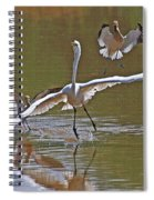 Avocets Chase Off The Egret Spiral Notebook