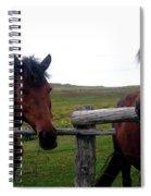 Awaiting Treats Spiral Notebook