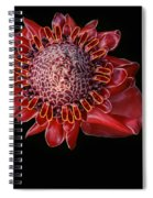 Awapuhi Ko Oko'o - Torch Ginger - Etlingera Elatior - Hawaii Spiral Notebook
