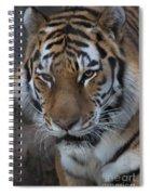 Aware Spiral Notebook
