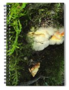 Awe Inspiring Fungi Three Spiral Notebook