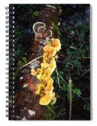 Awe Inspiring Fungi Two Spiral Notebook
