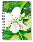 Awesome Apple Blossoms Spiral Notebook