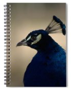 Awesome Peacock Spiral Notebook