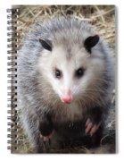 Awesome Possum Spiral Notebook