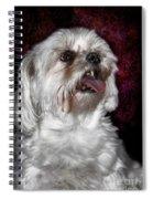 Awww....... Cute....... Awww Spiral Notebook
