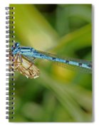 Azure Damselfly  Spiral Notebook