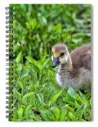 Babe On Safari Spiral Notebook
