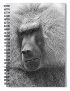 Baboon In Black And White Spiral Notebook