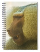 Baboon In The Sun Spiral Notebook