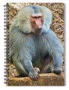 Baboon On A Stump Spiral Notebook