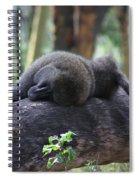 Baboon Sleeping Spiral Notebook