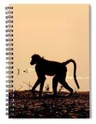 Baboon Sunset Spiral Notebook