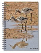 Baby Avocets At Grp Spiral Notebook