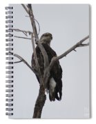 Baby Bald Eagle Spiral Notebook