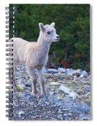 Baby Big Horn Sheep Spiral Notebook