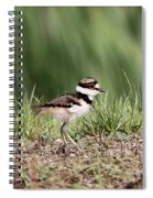 Baby - Bird - Killdeer Spiral Notebook