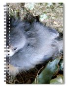 Baby Bird Learns A Lesson Spiral Notebook