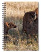 Baby Bison Meets Daddy Spiral Notebook