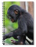 Baby Bonobo Spiral Notebook