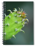 Baby Cactus - Macro Photography By Sharon Cummings Spiral Notebook