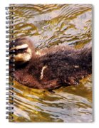 Baby Canadian Goose Spiral Notebook