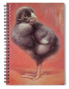 Baby Chick Spiral Notebook