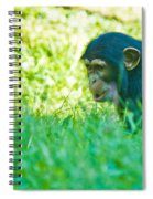 Baby Chimp In The Grass Spiral Notebook