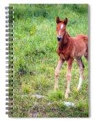 Baby Colt Spiral Notebook