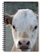 Baby Cow In Colorado Spiral Notebook
