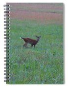 Baby Deer At Sunrise Spiral Notebook