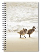 Baby Ducklings Spiral Notebook