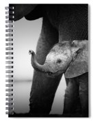Baby Elephant Next To Cow  Spiral Notebook