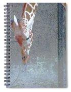 Baby Giraffe Spiral Notebook