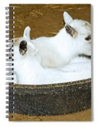 Baby Goats Lying In Food Pan Spiral Notebook