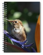 Baby Hummingbird On Flower Spiral Notebook