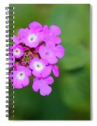 Flower - Baby In Pink Spiral Notebook