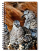 Baby Inca Doves Spiral Notebook